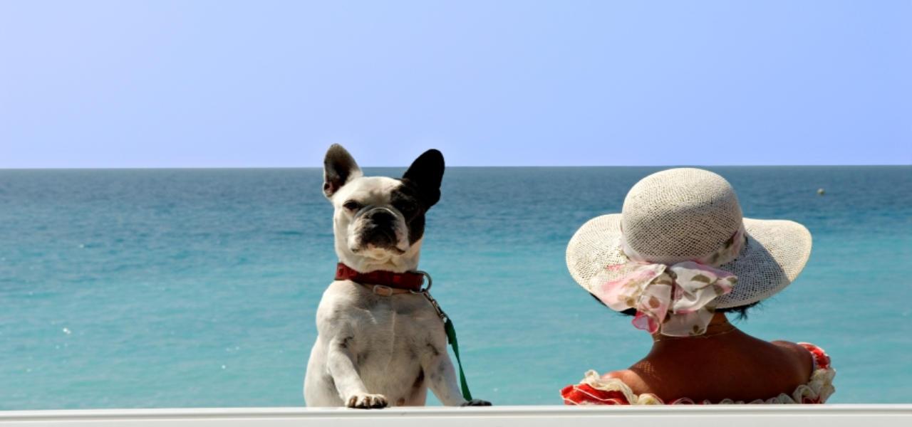 Typologie: <span>Ferienhaus mit Hund</span>